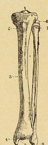 This image is taken from Principes d'anatomie et de physiologie appliqués à la gymnastique