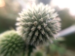 Cobweb on plant macro (C. HX) Tags: macro cobweb web spider plant flower flora floral botanica garden blur