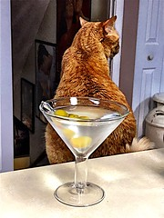 2019 169/365 6/18/2019 TUESDAY - Martini and Cat (_BuBBy_) Tags: 2019 169365 6182019 tuesday martini cat days 365 6 18 june 365days project365 project