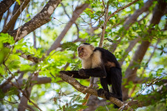 Costa-Rica (By Corsu) Tags: costarica canon eos nature sauvage animaux animal wild wildlife forêt wood flickr by corsu trek faune voyage travel 6d
