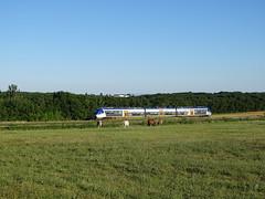 B81500 Cahuzac (pierre_joris) Tags: ter occitanie train chevaux