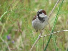 IMG_6814 (jesust793) Tags: pájaro pájaros birds naturaleza nature