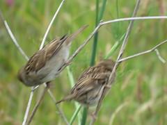 IMG_6817 (jesust793) Tags: pájaro pájaros birds naturaleza nature