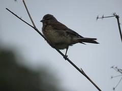 IMG_6799 (jesust793) Tags: pájaro pájaros birds naturaleza nature