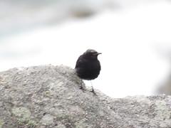 IMG_6776 (jesust793) Tags: pájaro pájaros birds naturaleza nature