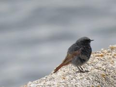 IMG_6740 (jesust793) Tags: pájaro pájaros birds naturaleza nature