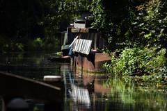 Basingstoke Canal Byfleet 16 June 2019 (33) (paul_appleyard) Tags: basingstoke canal byfleet waterway boat houseboat rusty surrey june 2019