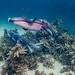 Giant Cuttlefish Blairgowrie-10
