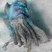 Giant Cuttlefish Blairgowrie-8