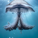 Jellyfish Blairgowrie-4