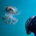Jellyfish Blairgowrie-1
