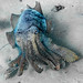 Giant Cuttlefish Blairgowrie-7