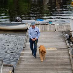 Dock Walk (johnarey) Tags: dogs retriever goldenretriever goldens dock camden maine