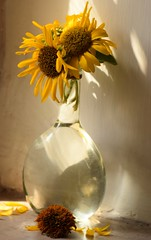 The last of the season (Vidya...) Tags: sunlight sunflowers afternoon summer yellow petals nikond5300 85mm stilllife vase trsnsparent nature flowers