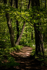The Deep (lclower19) Tags: rachelcarson wells maine trees path green brown foliage