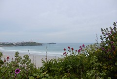 Newquay views! (rockwolf) Tags: newquay beach coast sea mer côte plage flowers fleurs cornwall 2019 rockwolf