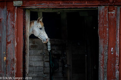 EM-190602-POST-004 (Minister Erik McGregor) Tags: erikmcgregor nyc newyork photography 9172258963 erikrivashotmailcom ©erikmcgregor usa photooftheday horse barn steed equine youngstallion horses equestrian redbarn farm outdoors outdoorlife roadtrip olmstedcamp sardinia horsesofinstagram horsephotography nikonphotography nikon