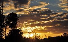 Uma tarde de Outono (Ruby Ferreira ®) Tags: pordosol sunset silhuetas silhouettes trees branches árvores sun nuvens clouds notreatment