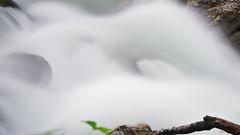 _DSC8563 (papoune85) Tags: eau tourbillon pauselente bouillonnante torrent water swirl slowbreak bubbling