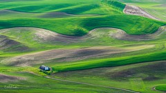 The Palouse (Linda JP) Tags: summerfallow green crop crops fields field steptoebutte steptoe rollinghills hills thepalouse palouse