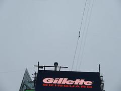 2019 Wallenda Tightrope Line above Times Square 1928 (Brechtbug) Tags: tightrope line above times square that wallenda guy will walk sunday june 23rd 2019 nyc 06192019