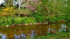 Fr_2019-2_62_R_K (vitalijsosna) Tags: frühling spring blumen flowers natur landschaft landscape grüne green land lake swamp sumpf vitalijsosna garten garden park see