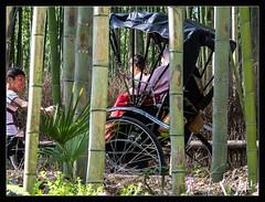 4ème jour / 4th day - Pousse-pousse dans la bambouseraie / Rickshaw in the bamboo plantation - Arashiyama (christian_lemale) Tags: arashiyama japon kyoto japan nikon d7100 嵐山 京都 日本