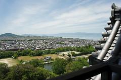 R0022127 (米奇 黃) Tags: ricoh gxr a12 gr lens 28mm f25 hikone shiga japan 彥根 滋賀 日本 travel street snap 彥根城 琵琶湖