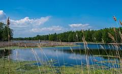 Lake Erie Marsh Metro (Epperly Photographic Images) Tags: marshland marsh landscape lake erie michigan nature bluesky fujifilm xt2