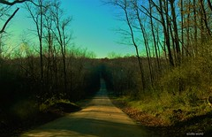 Down a country road (SCOTTS WORLD) Tags: adventure america americana fun fall forest woods rural road bluesky clouds afternoon sky shadow sunlight nature november michigan midwest panasonic pov perspective vanishingpoint view hill blue green grass weeds weather outdoors country hadley