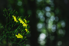 _IMG4027 (angel.doychinov) Tags: smc pentaxm 50mm f4 macro pentax k1 flowers nature pentaxflickraward