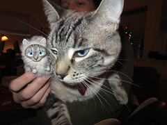 12/25/2018 (sixheadedgoblin) Tags: lucy cat charity polymerclay sculpture xmas