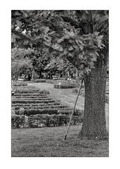Garden rake taking a rest (K.Pihl) Tags: analog aarhus monochrome vestrekirkegård cemetary kodaktrix400320 denmark pellicolaanalogica schwarzweiss bw blackwhite film olympusom4