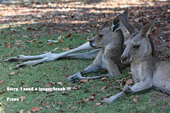 Sorry, I need a longer break!!! Have a good time !!! (Uhlenhorst) Tags: 2014 australia australien animals tiere travel reisen abigfave specanimal coth5