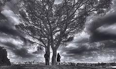 """De Madrid al cielo"" (Manuel Peña Jiménez) Tags: casadecampo madrid ciudad árbol nubes cielo paisaje naturaleza fujifilmxs1 blancoynegro bw absoluteblackandwhite"