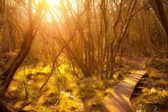 _MG_1113 (phreddyy) Tags: southampton hampshire uk netley woods woodland ponds trees sunset sundown evening light yellow canon canon5dmkii 5d2 outdoor location nature