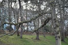 Both sides of the park 1. (tony allan tony allan) Tags: hastings houses trees park m42 manualfocus legacyglass nikond80 sigma70210mmlens