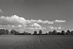 Cranage, June 1995 (Paul of Congleton) Tags: cranage cheshire england uk ploughed field crops seedlings trees clouds sky summer olympus om4ti 35mm monochrome blackandwhite film
