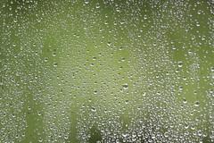 vert d'eau (gaelikk) Tags: vert green humide wet eau canon canon600d 70300mm gouttes