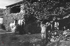 A Tree and a House (fs999) Tags: fs999 fschneider aficionados pentax ist starist pentaxist pentaxian justpentax 35mm film 24x36 camera 135 filmcamera ashotadayorso topqualityimage topqualityimageonly artcafe pentaxart corel paintshoppro paintshoppro2019ultimate 2019ultimate plaisians drome provence france ilford delta delta400 400iso blackwhite blackandwhite bw noirblanc noiretblanc nb blackwhitephotos caffenol clcs cold start stand home development plustek opticfilm 120 scanner 2400dpi silverfast ai studio