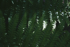Nature Geometry (youdoph) Tags: leaf woods forest plant beautiful green sun lights