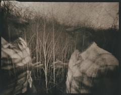 Embrace Thy Shadow (micalngelo) Tags: analog papernegative pinholecamera pinhole largeformatpinhole zeroimagepinhole lomography lomojunkie aristasemimatte sepiatoned toycamera toycameraphotography