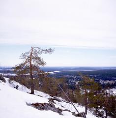 Kätkätunturi (mantila) Tags: provia 100f fujifilm rolleiflex tlr finland nature winter levi kätkätunturi mountain lapland snow pine steep wilderness lappi suomi slide film landscape