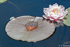 LA CONCEPCION IV (Yayo Tortosa) Tags: jardinbotanico junio2019 laconcepcion malaga nikondf pwmelilla sigma2470 viajephotowalk
