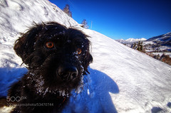 Can we go now? (Dr. Ernst Strasser) Tags: ifttt 500px kleinwalsertal black bright clear dog hiking mountain sky small snow winter austria hirschegg ernst strasser unternehmen startups entrepreneurs unternehmertum strategie investment shareholding mergers acquisitions transaktionen fusionen unternehmenskäufe fremdfinanzierte übernahmen outsourcing unternehmenskooperationen unternehmensberater corporate finance strategic management betriebsübergabe betriebsnachfolge