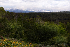 The Long View (RH Miller) Tags: rhmiller reedmiller landscape mountains tetons wildflowers yellowmulesears idaho usa