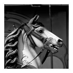 CÄSAR (RadarO´Reilly) Tags: pferd horse karussell merrygoround kirmes funfair sw schwarzweis bw blackwhite blanconegro monochrome noiretblanc zwartwit rahmen frame