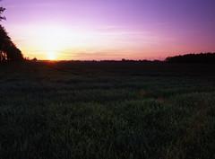 Sunset in Rütenmoor (Ernst-Jan de Vries) Tags: sunset zonsondergang sonnenuntergang wheat weizen tarwe spring windmills windmolen haren harenems ems niedersachsen 120 645 analoog analog analogue middenformaat mittelformat mediumformat film slide dia diafilm fujivelvia50 fujifilm velvia fuji istilshootfilm