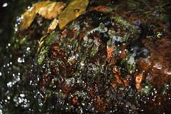 La Forme de l'Eau (alexandreweber_zootrope) Tags: nature extérieur eau eauvive coursdeau rivière couleurs forme texture provence france ngc proxi