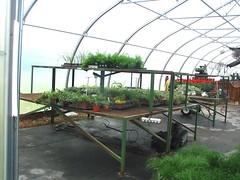 DSC07365 (Bristolsun) Tags: bullards3rdsaturdays bullardsgreenhouseandfarmmarket elkhart indiana freshstrawberries